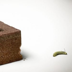 Caterpillar took a bite out of a brick